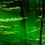 Lichter im Wald — Stockfoto