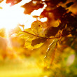Stock Photo: Colorful leaves with sunbeam