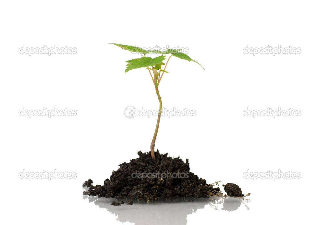 Little plant in dirt isolated on white background. — Stock Photo #5452237