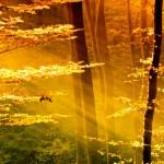 luzes da floresta de manhã — Foto Stock