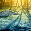 Lights of the morning forest — Stockfoto