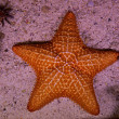 Stock Photo: Starfish in Cozumel Mexico