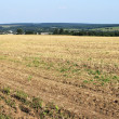 Field at the end of the summer after harvest — Stock Photo #6433113