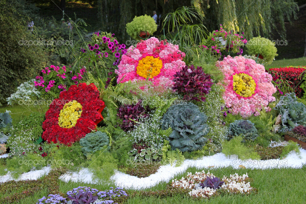 flores para jardim verao : flores para jardim verao:Late Summer Blooming Garden Flowers