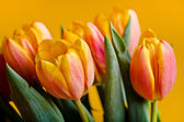 Colorful fresh tulips — Stock Photo