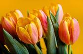 Colorful fresh tulips — Foto de Stock