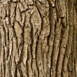 Stock Photo: Bark background