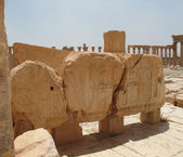 Palmyra is an oasis in desert — Stock Photo