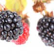 Blackberries — Foto Stock