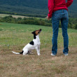 Training the dog obedience — Stok fotoğraf