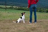 Training the dog obedience — Stock Photo