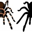 Stock Vector: Spider Silhouette 1