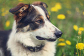 Adorable portrait of a beautiful dog — Foto Stock