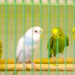Parrots — Stock Photo #5443219