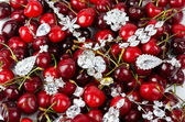 Jewels at cherries — Stock Photo
