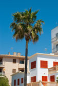 The palm and residential houses locked for siesta, Majorca, Spai — Stock Photo