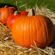 Three sunlit pumpkins in a row — Stock Photo