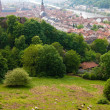 Sheep on the hill and Heidelberg old town — Stock Photo #6388923