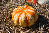 Big striped pumpkin on the hay — Stock Photo