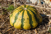 Green striped pumpkin on the hay — Stock Photo