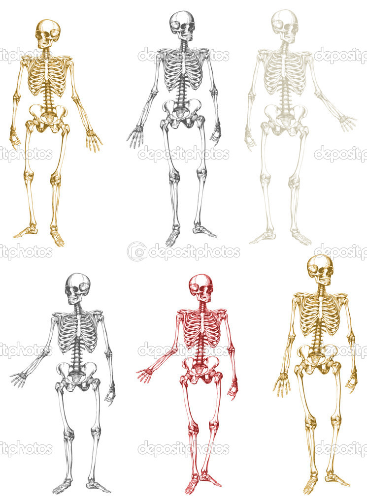 A collection of antique vector skeletons.  Stock Vector #6597201