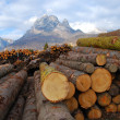Pile of log - Dolomites — Stock Photo