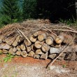 Stock Photo: Woodpile in Dolomites