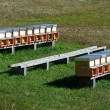 Bee hives (apiary) in field — Stock Photo #6724184