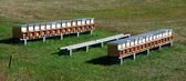 Bee hives (apiary) in a field — Stock Photo