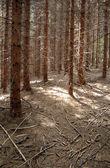 Autums lesy — Stock fotografie