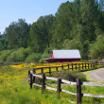 Red Barn in Yellow Wildflower Field — Stock Photo #6399916