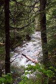 Denny Creek, Washington — Stock Photo