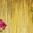 Fresh orchids with bamboo background — Stock Photo
