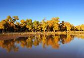 Paisaje de otoño en el parque de mañana — Foto de Stock