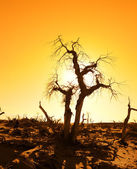 Death tree against sunlight over sky background in sunset — Stock Photo