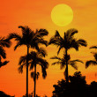 Palm with sunset — Stock Photo
