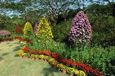 Flower bushes — Stock Photo