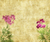 Orchids with bamboo leaves on old grunge antique paper texture — Stock Photo