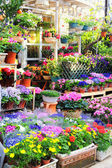 Flowers for sale in a greenhouse — Stock Photo