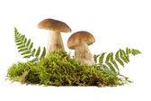 Two fresh mushrooms — Stock Photo