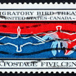 Stock Photo: Postage stamp US1966 Migratory birds over Canada