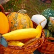 Decorative gourds — Stock Photo