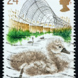 Stock Photo: Postage stamp GREAT BRITAIN 1992 Cygnet
