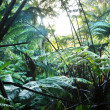 Jungle- rain forest in Hawaii — Stock Photo