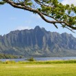 Stock Photo: Hawaii -Oahu island
