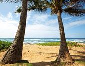 Beach on Hawaii — Stock Photo