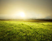 Fog in meadow — Stock Photo