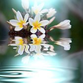 Flowers flooded — Stock Photo