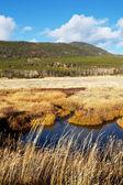 осень в сьерра-невада — Стоковое фото