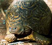 Turtle close up — Stock Photo